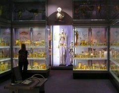 170405-A visit to the HunterianCollection.jpg